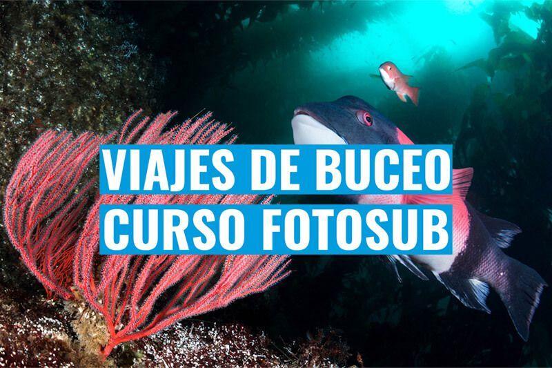 viajes de buceo y fotografia submarina