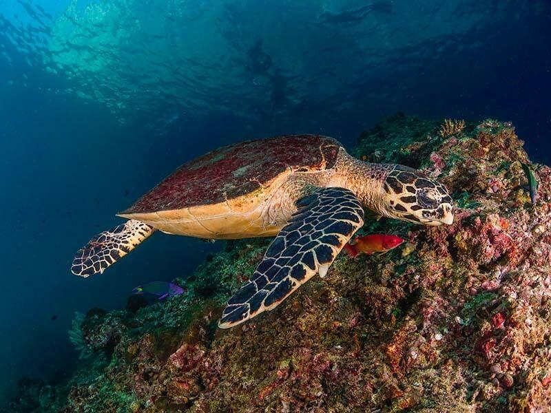 foto submarina gran angular tortuga