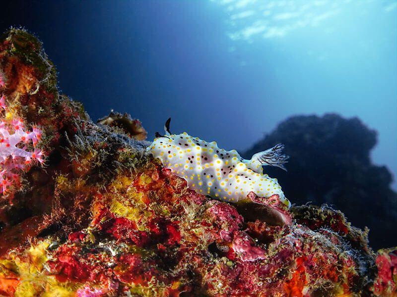 fotografia submarina macro gran angular