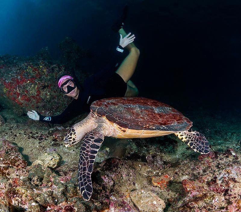 trabajar de fotografo submarino animal estrella