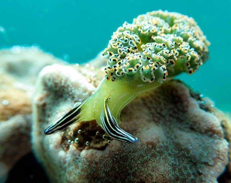 fotografia submarina macro nudi