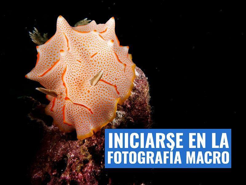 iniciación fotografia macro submarina