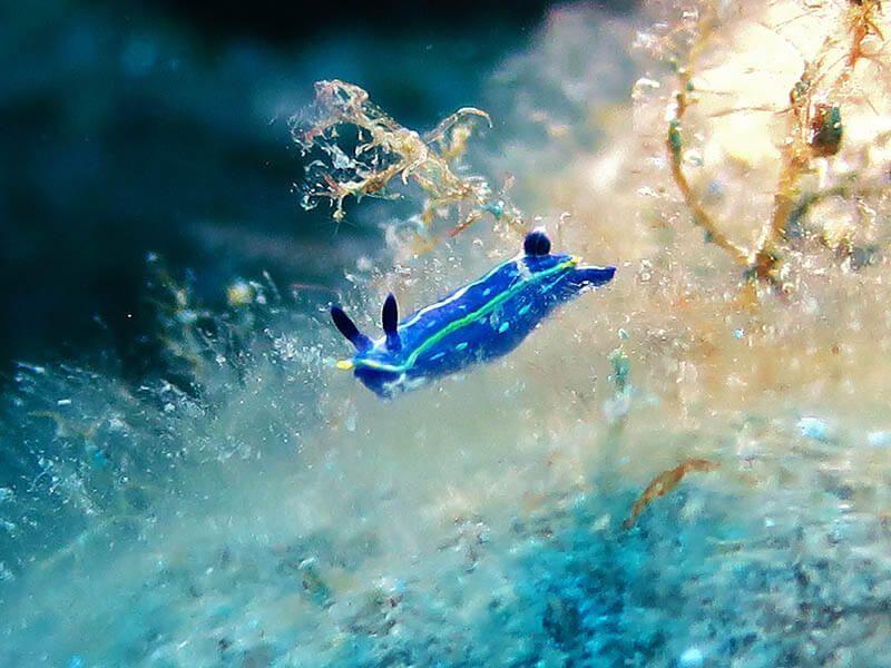 macrofotografia submarina rellena el encuadre