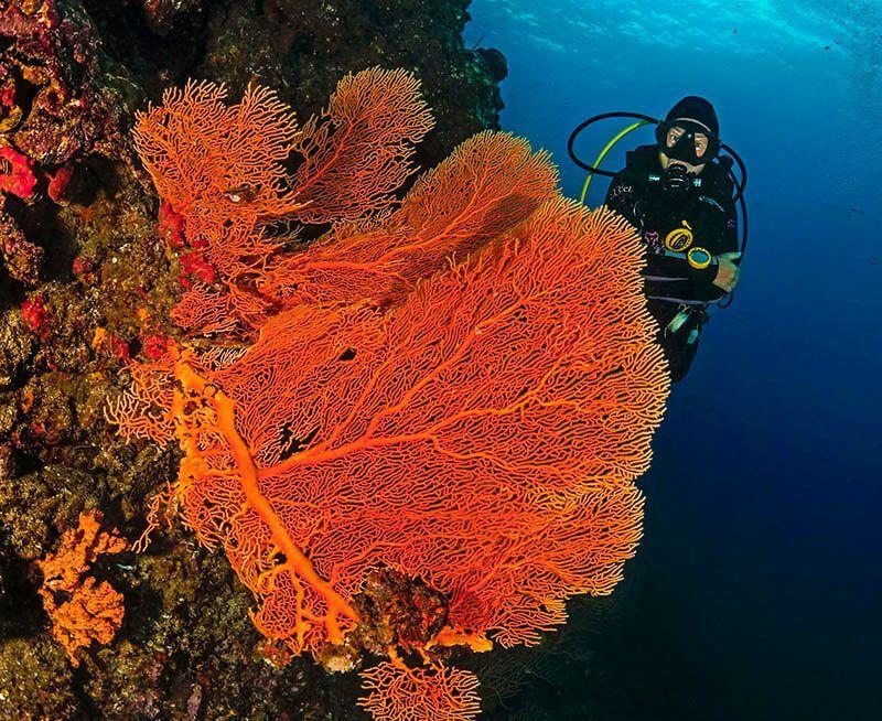 El buceo en Koh Lanta - grandes gorgonias