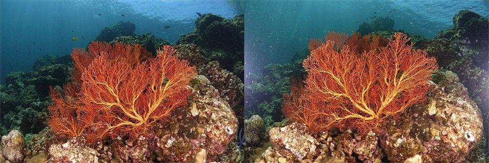 problemas de fotografía submarina aprender a colocar los flashes