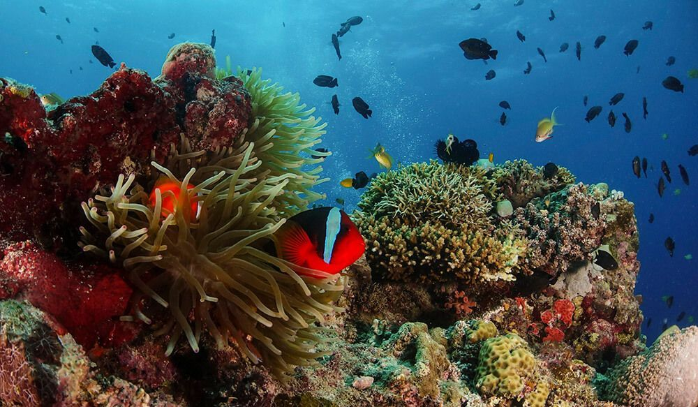 problemas de fotografía submarina foto angular