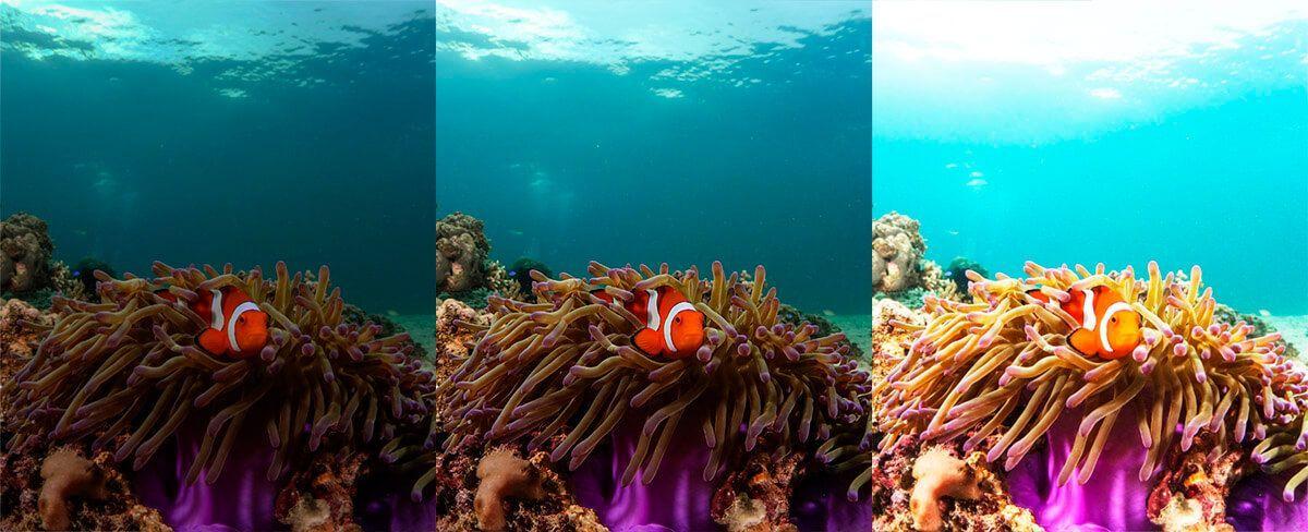 problemas de fotografia submarina no medir la luz