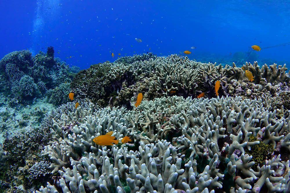 compensacion exposicion en fotografia submarina ejemplo velocidad 1