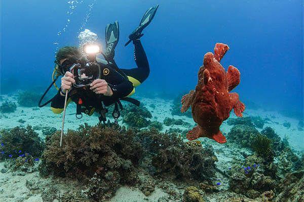 viaje de buceo Filipinas fotografia submarina fotosub (12)