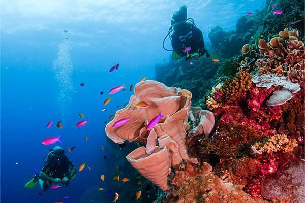 viaje de buceo Filipinas fotografia submarina fotosub (4)
