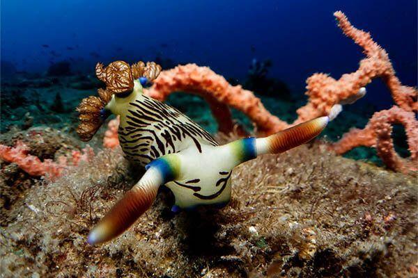 viaje de buceo Filipinas fotografia submarina fotosub (6)