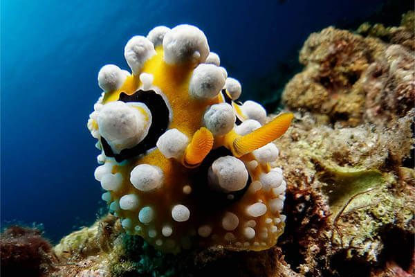 viaje de buceo Filipinas fotografia submarina fotosub (9)