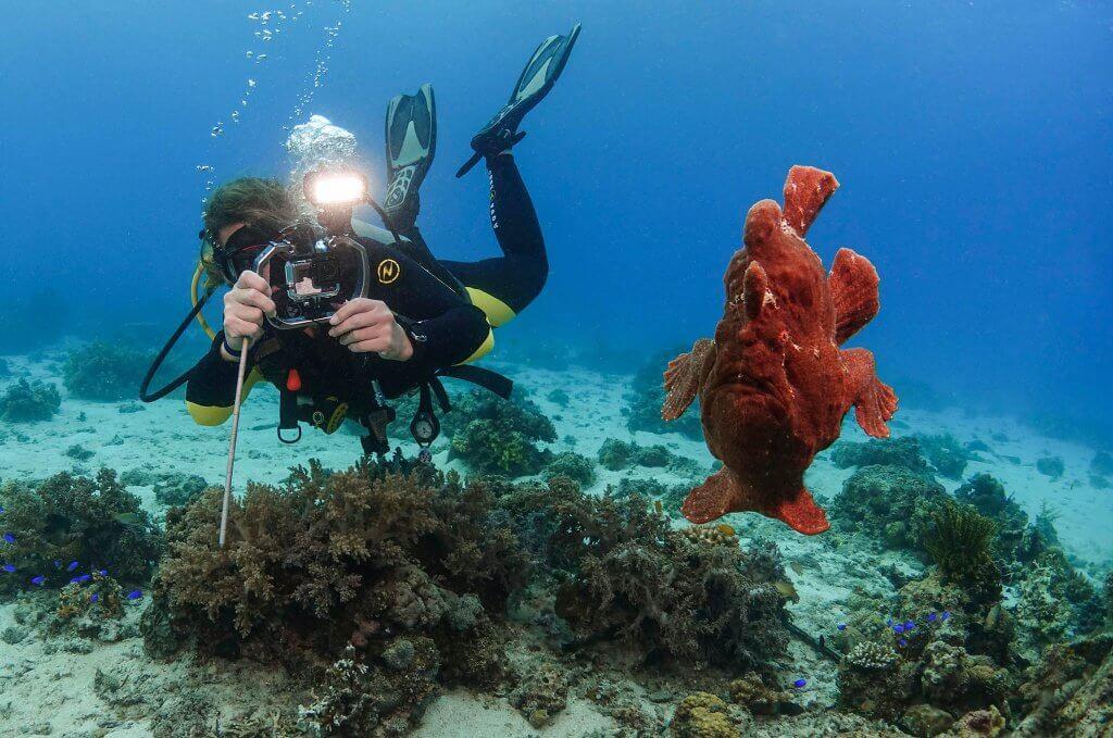 viaje de buceo y fotografia submarina a filipinas bohol