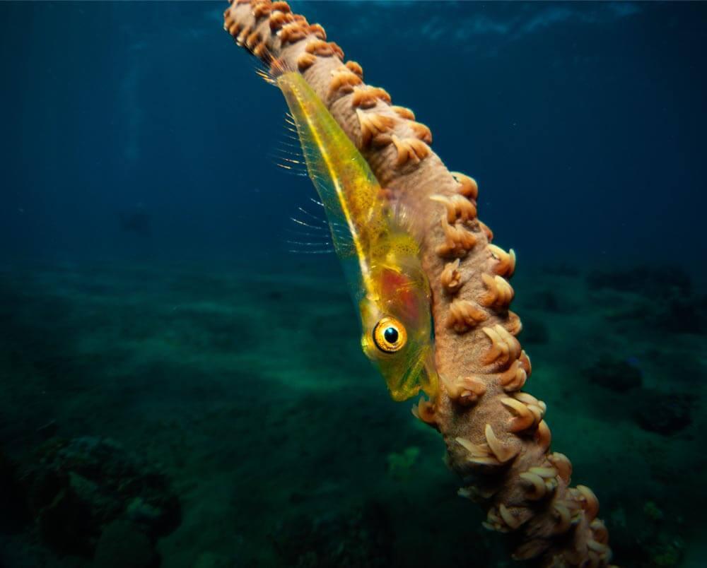 Lente endoscopica Inon en equipo de fotografia submarina