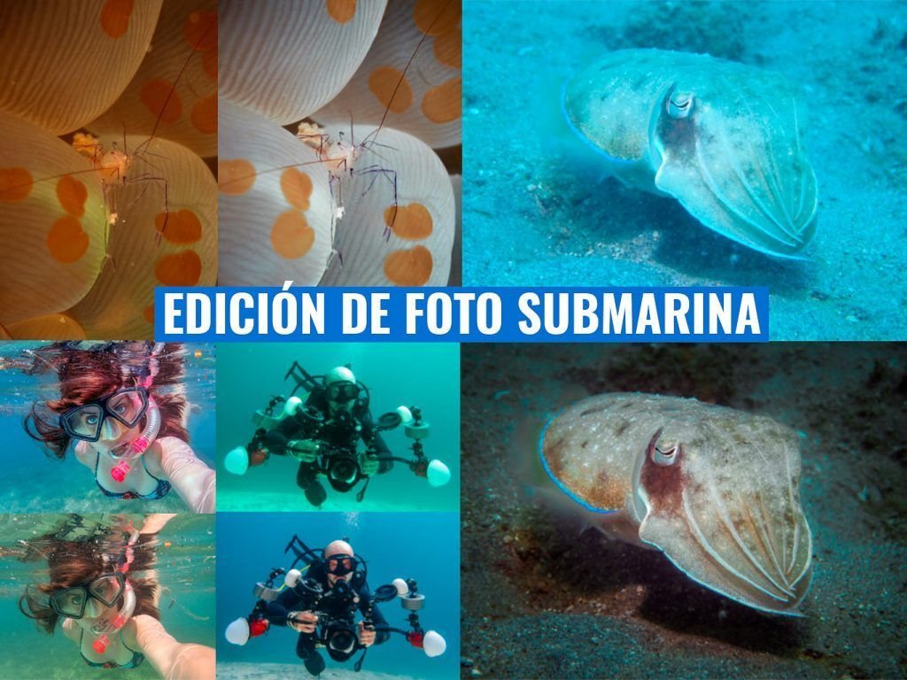 como editar tus fotografias submarinas