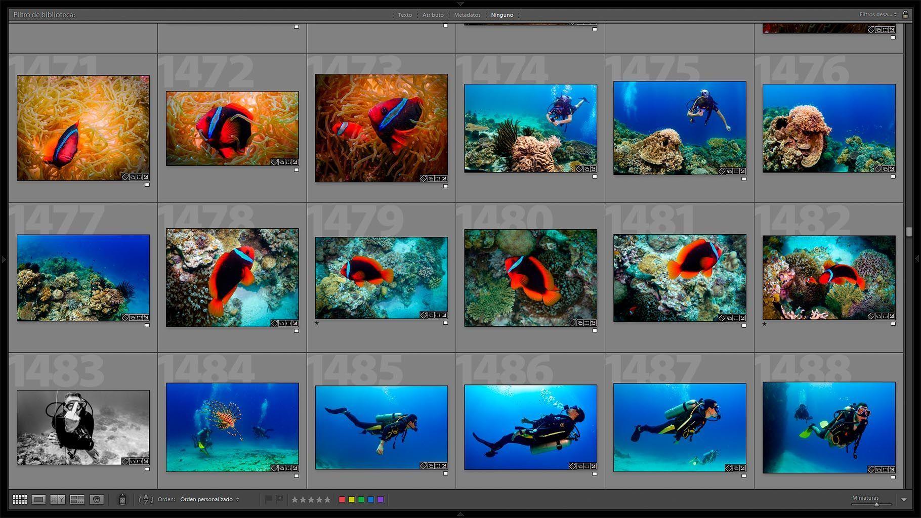 edicion de fotografias submarinas - Haz una seleccion de fotos