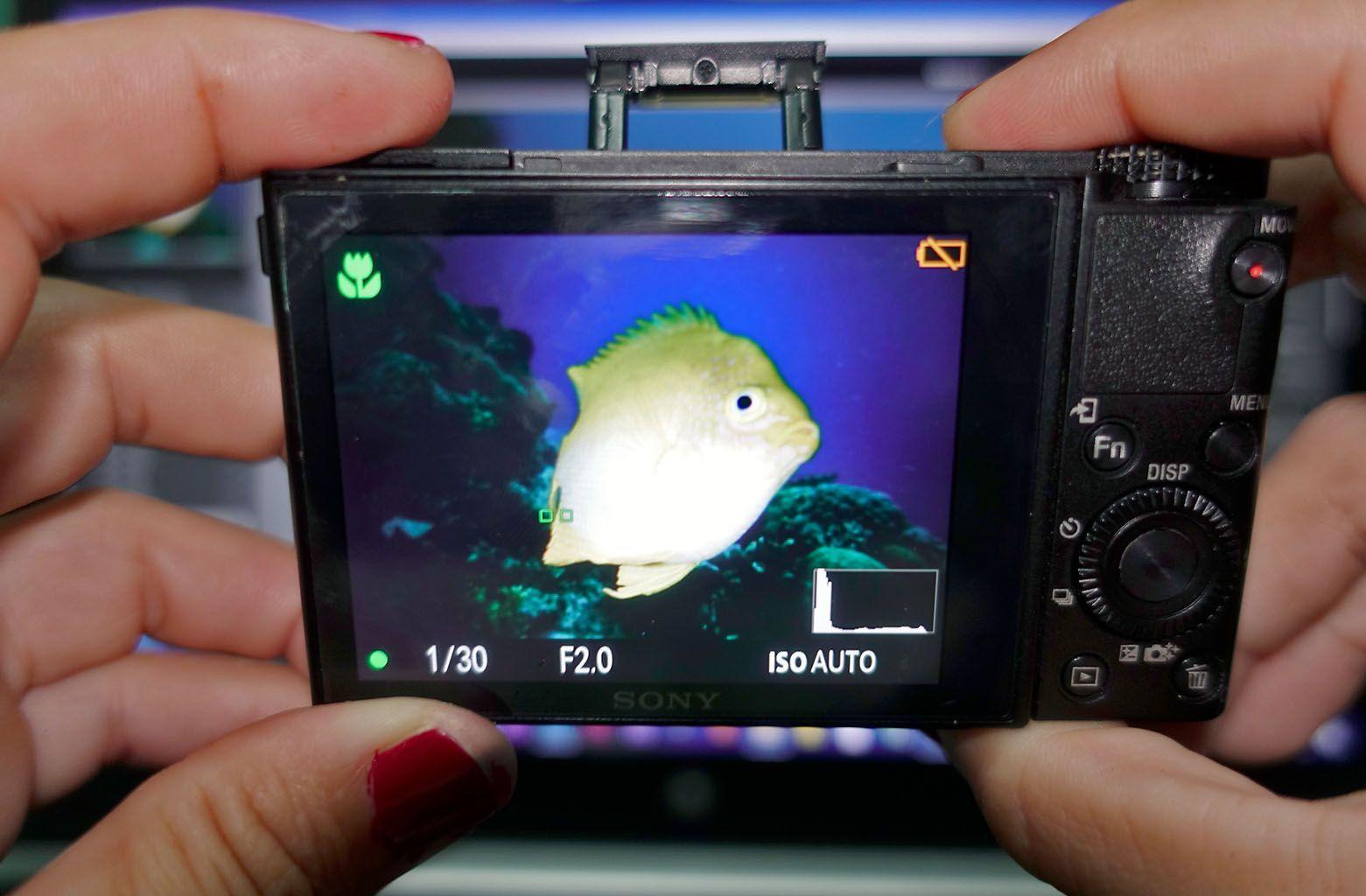 el histograma en la camara foto submarina