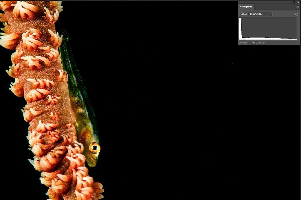 leer el histograma de las fotografías submarinas con fondo negro