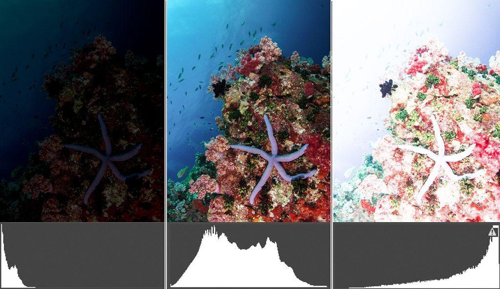 cómo leer el histograma de las fotografías submarinas para mejorar la exposiciónarina exposicion