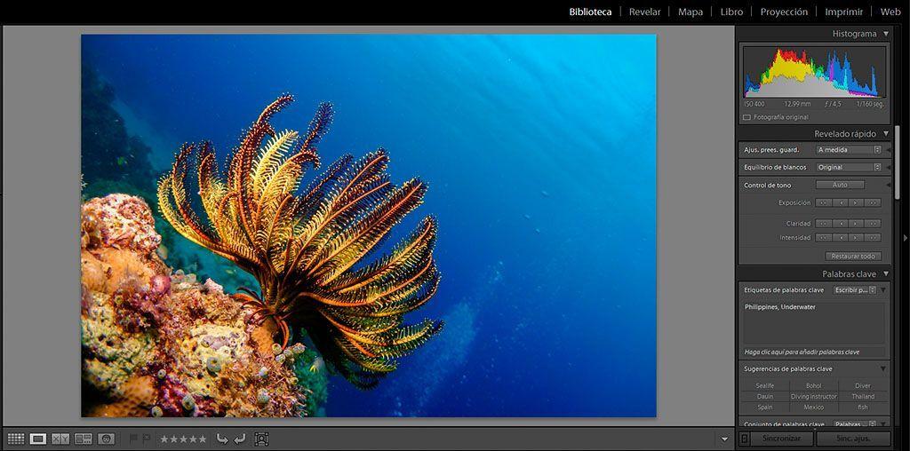 leer el histograma de las fotografías submarinas en lightroom