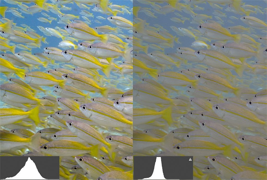 histograma fotografia submarina diferencias contraste