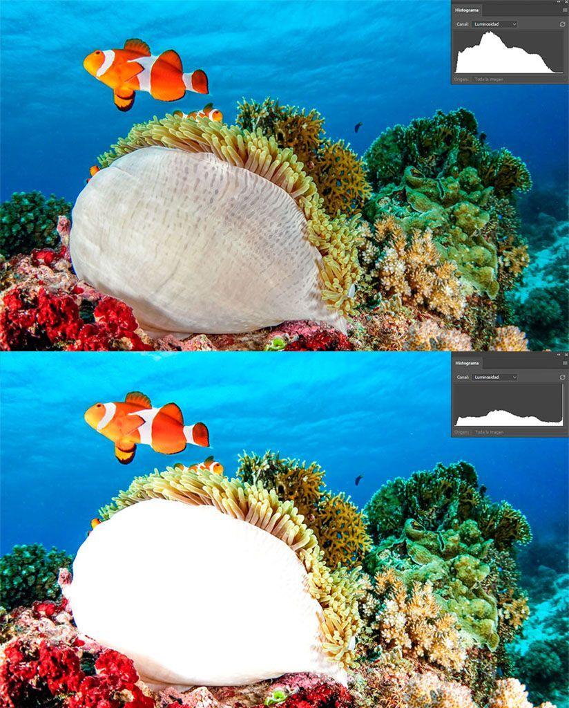 histograma luminosidad fotografia submarina recorte de luces