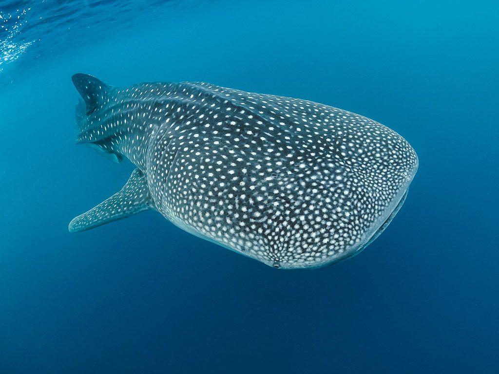 fotografia submarina con luz ambiente viajarbuceando.com ejemplo (3)