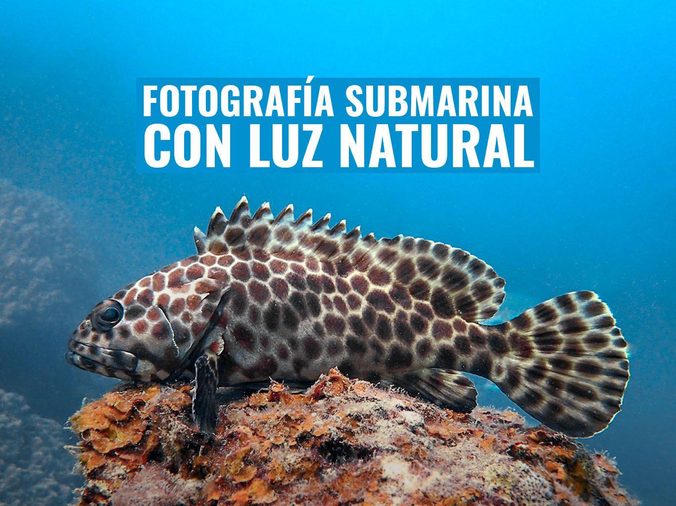 fotografia submarina con luz ambiente