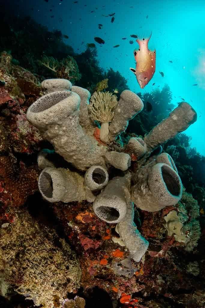 Coral de los buceos de Bohol