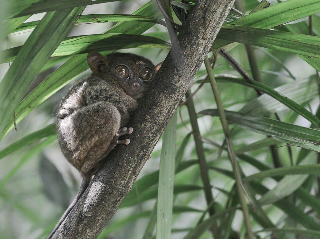 Fauna de Bohol