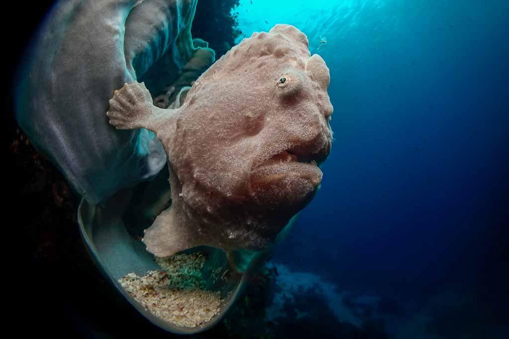 Frog fish bajo las aguas de Bohol
