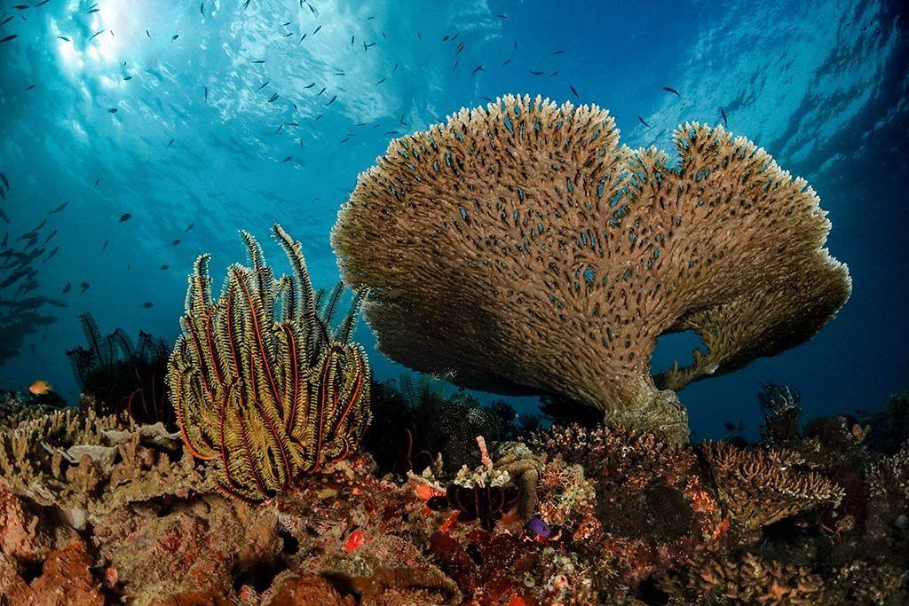 House Reef, inmersión de Bohol