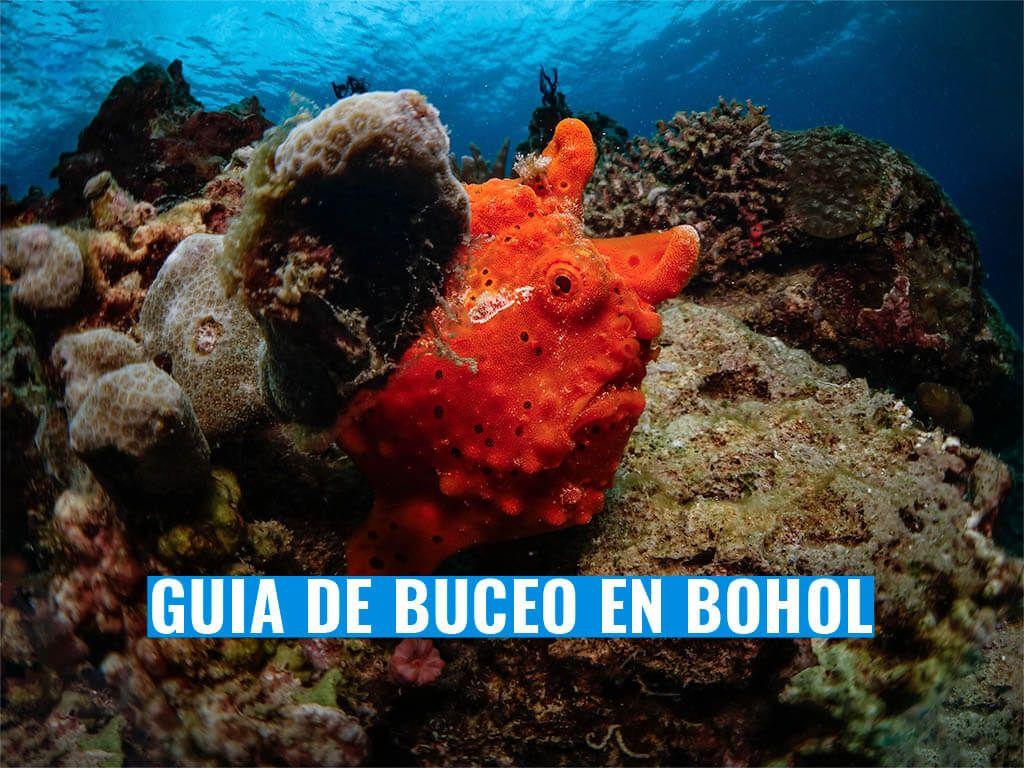 Bucear en Bohol guia de inmersiones, Filipinas