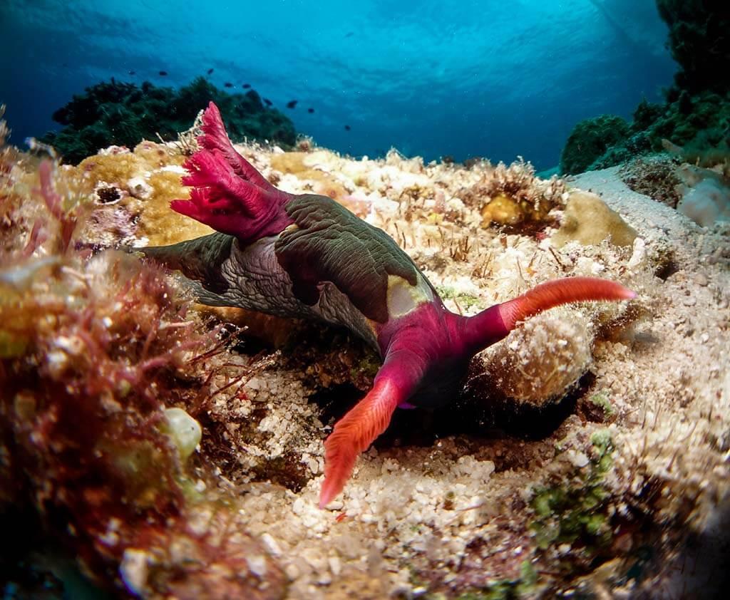 nudibranquios buceando en Bohol