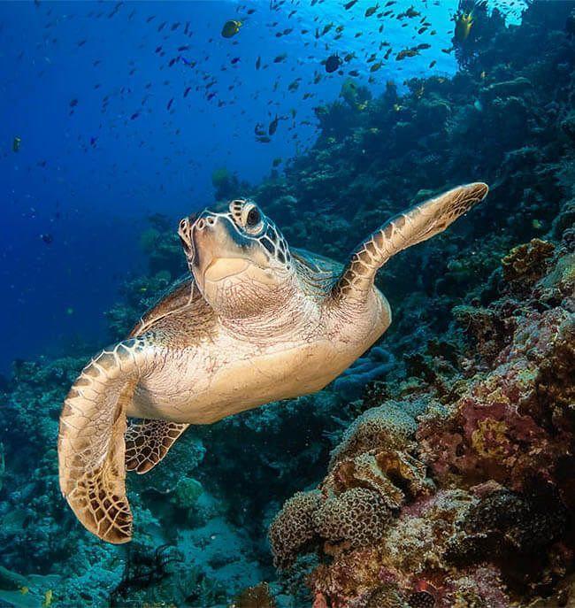 libro de fotografia submarina