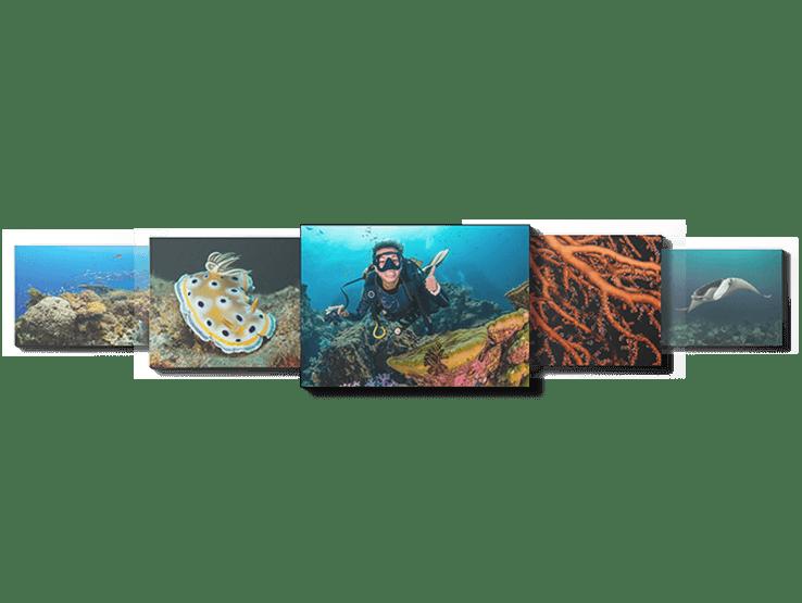 proyecto fotográfico del curso de fotografia submarina