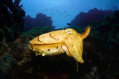 Libros y cursos de video y foto submarina por viajarbuceando.com
