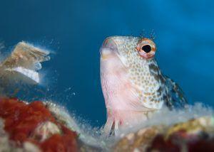 Cursos de fotografia submarina presenciales - Costa Brava - Blenido
