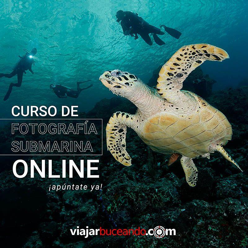 curso online posts blog